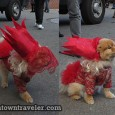 TweetNew Yorkers are known for our fashion sense&#8211; and our dogs are no exception. Pooches from across the city gathered in the East Village on Saturday to show off the...