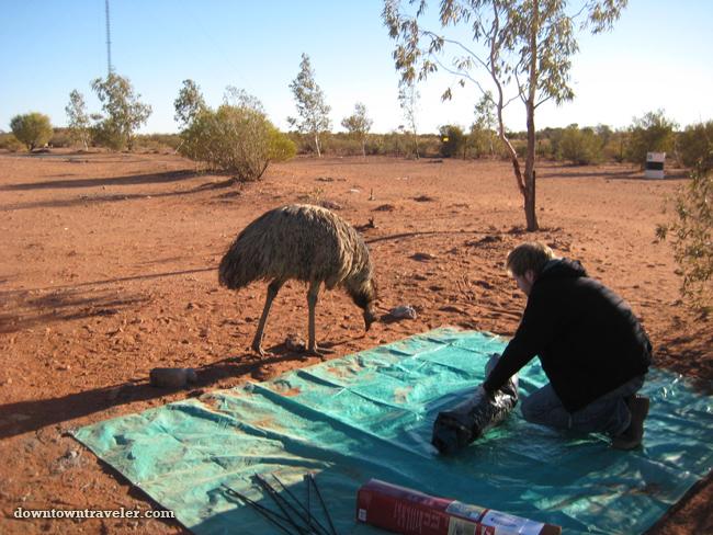 Australia-Outback-Camping-Emu.jpg