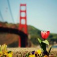 TweetWhat's the best way to explore San Fransisco? Taking into consideration San Francisco's notoriously steep city streets, nine of which feature a grade of 24 percent or more, you might...
